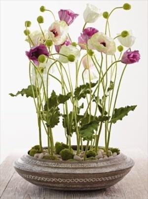 135 best indoor gardening images on pinterest inside garden simple and pretty mightylinksfo