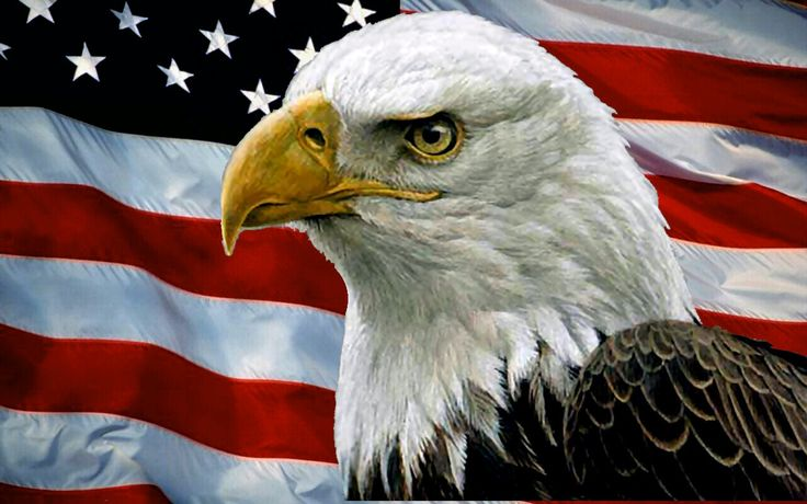 bald eagle with american flag | Bald eagle and usa flag fireworks occasion HD Wallpaper