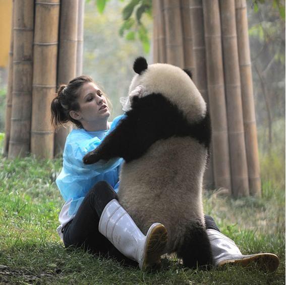 5 Animales que merecen la extinción » Listeilor.com