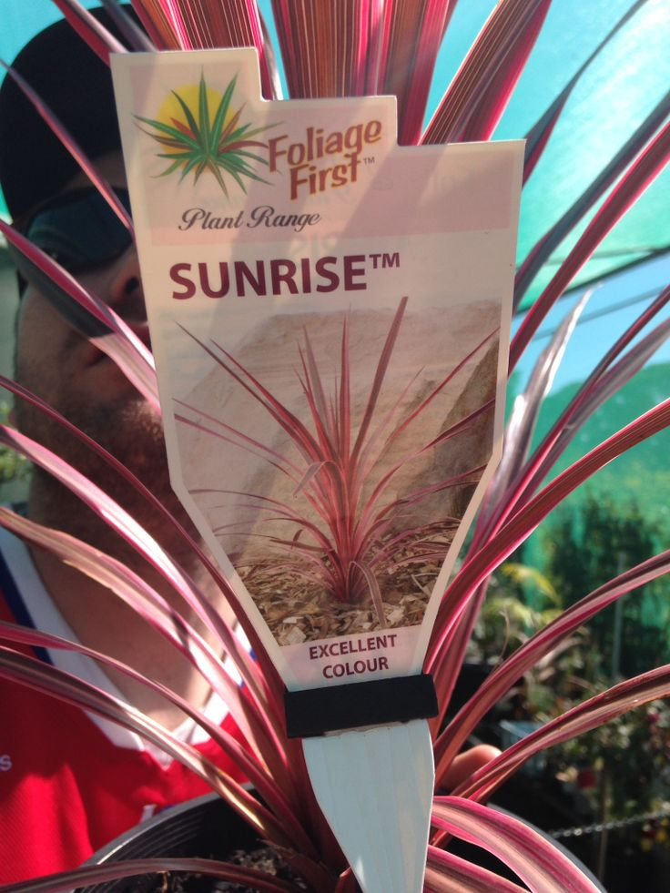 Sunrise $16 grows to 1m