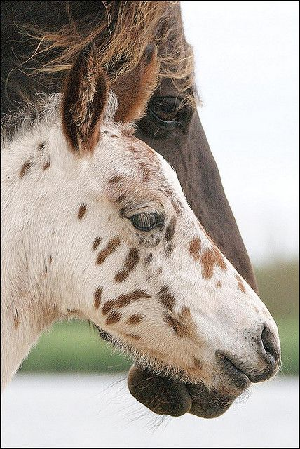 Mother and New Born Foal
