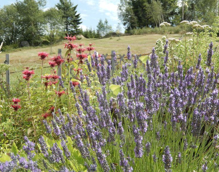 DIY: Lavendel-Badekugeln selber machen #DIY #selbermachen #Lavendel #Bedekugel