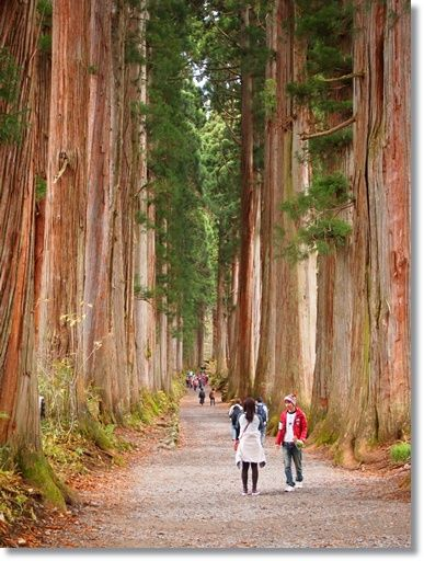The old road with Japanese cedar trees leading to Hagakushi Shrine, Nagano, Japan