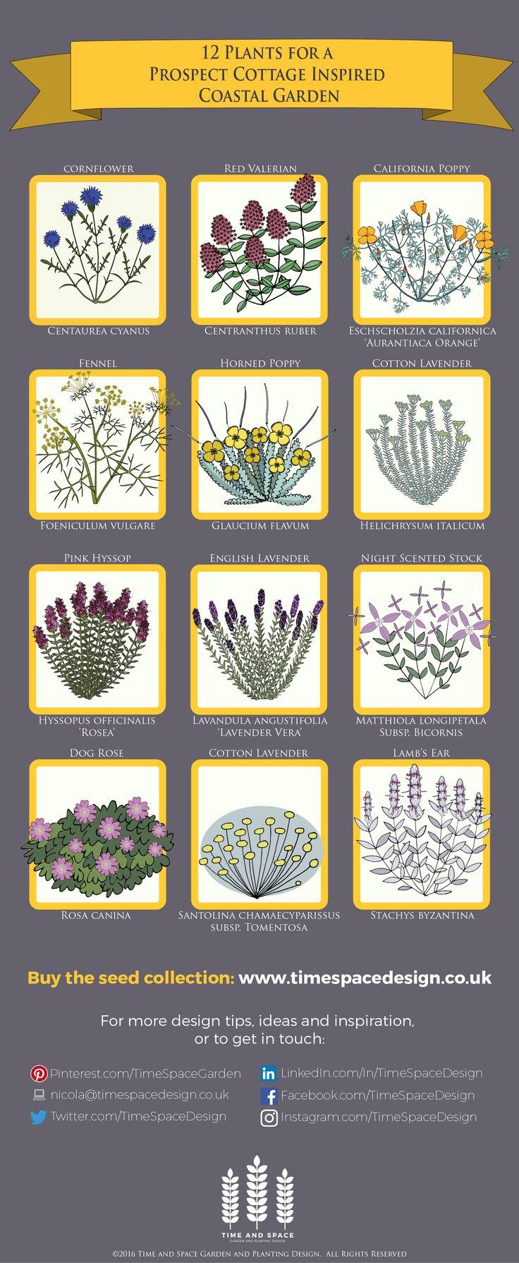 12 Plants for a Prospect Cottage Inspired Coastal Garden