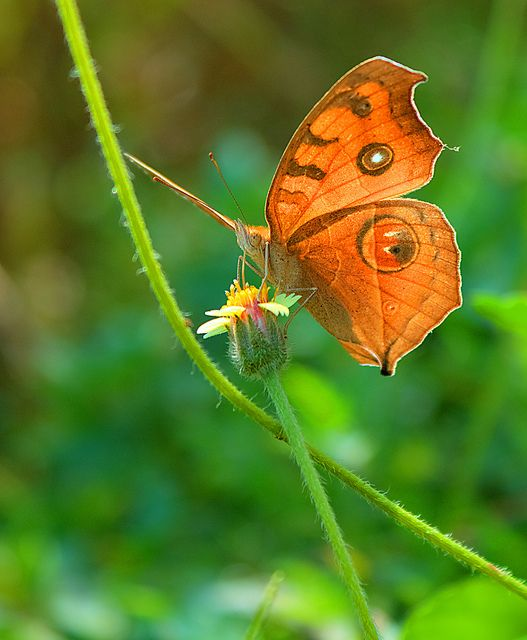 463 best images about Butterfly Photography on Pinterest ...