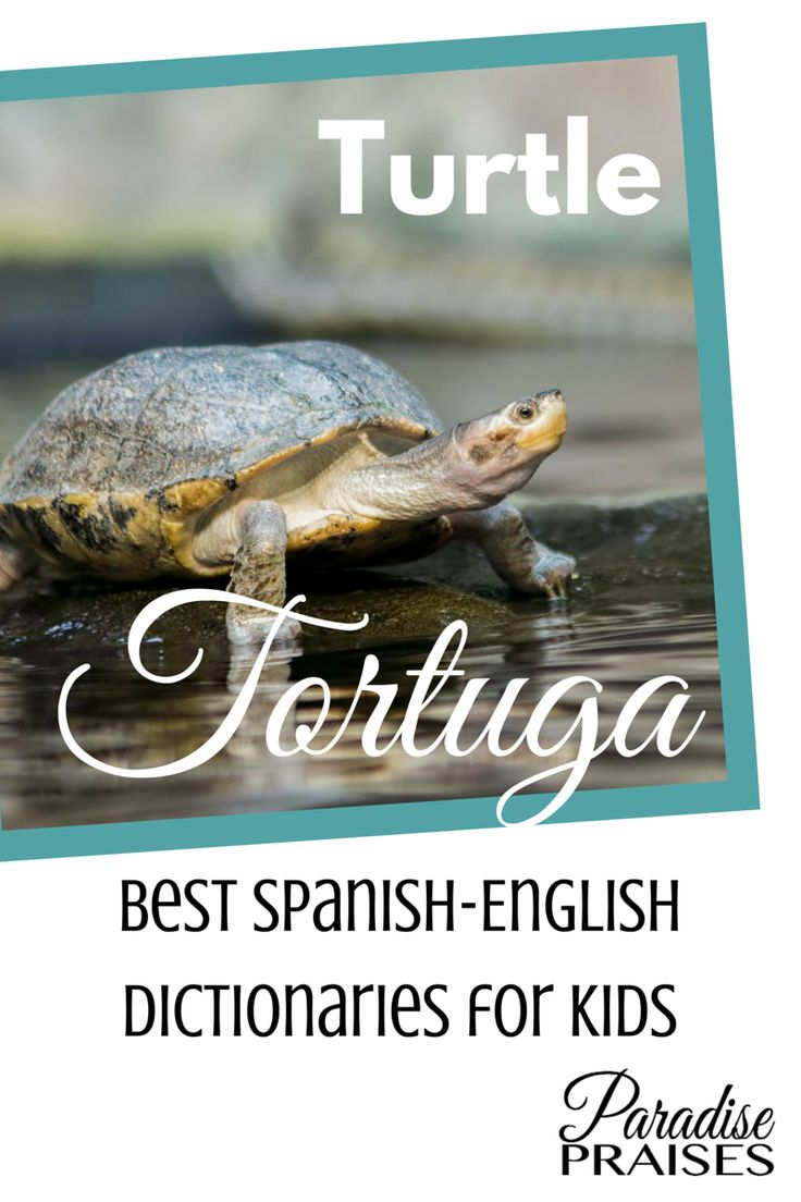 Best spanish english dictionaries for kids of all ages