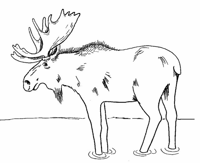 Moose coloring page 2 Free Printable