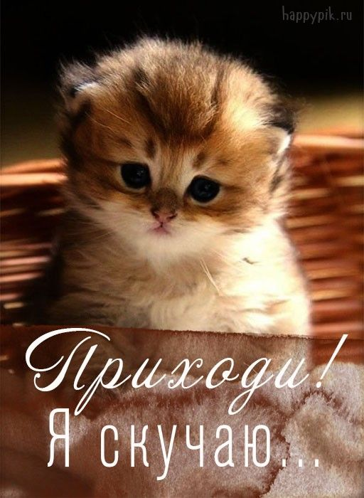 Картинки скучаю по котенку