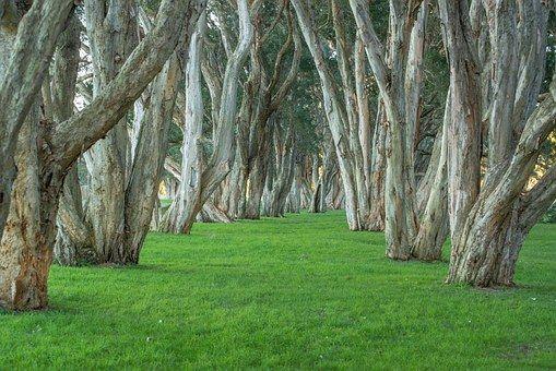 Trees, Park, Centennial Park
