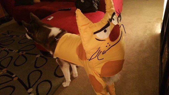 Dog Costumes Halloween