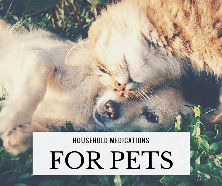 Household Medications For Pets Pet medications, Pets