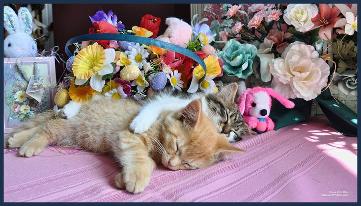 Cute Easter Kitty Cat Kittens in Home Garden Art Decor with Easter Eggs, Stuffed Bunny Rabbits & Spring Flower Basket with Daffodils & Tulips on an Easter Holiday Weekend in Canada. Cute Kitty Cat Kitten ...Kitties Cats Kittens...Cute Kitty Cat Kitten...