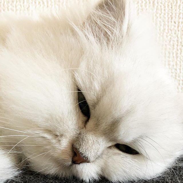 のえるちゃん旅猫はじまります ねこ 旅猫リポート 旅猫 Cats Animals