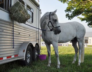 Four Dietary Tips for Healthy Horse Transport   Equinews