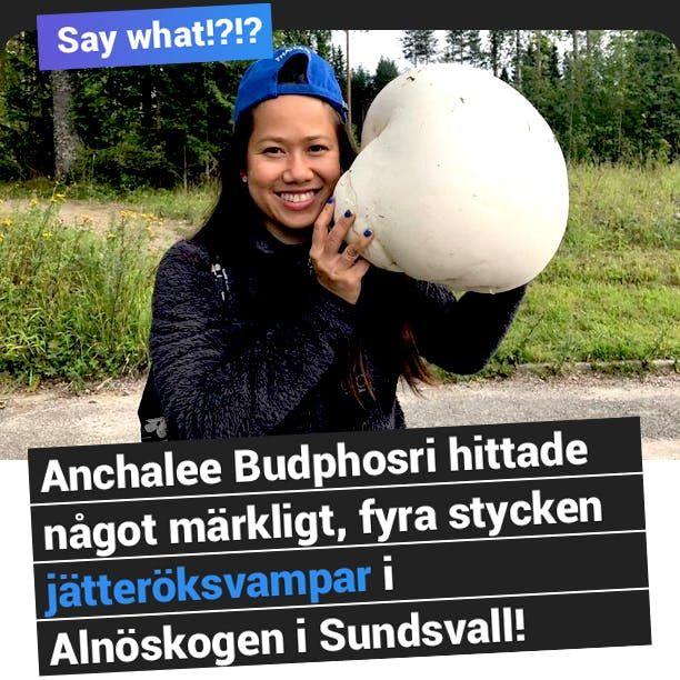 Jättesvampar i Sundsvall!