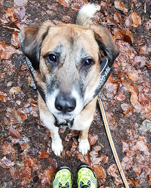 10 Tipps Fur Bessere Hundefotos In 2020 Hunde Fotos Hundefotos Fotos