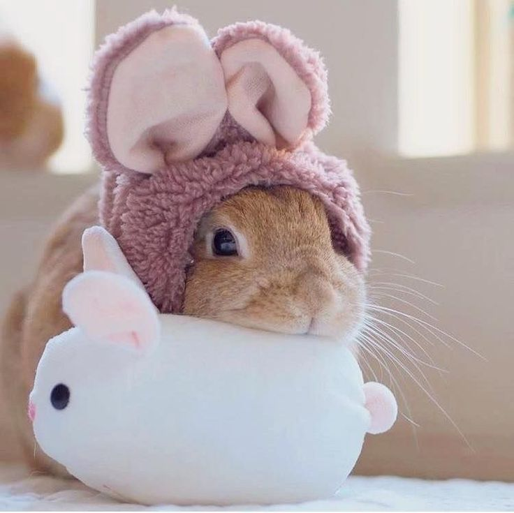 Картинки крольчат милые и смешные