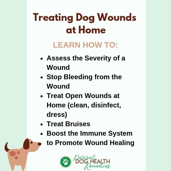 How To Treat Dog Wounds Stop Bleeding Dog Wound Dog Health