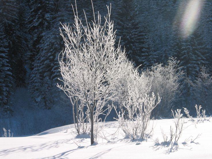 Winterlandschaft #winter #austria