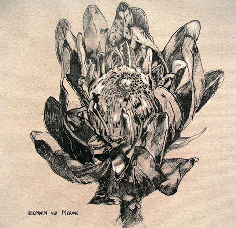 Title: Gesnoei (Pruned) Medium: Pen and ink on paper Size: 200mm x 195mm
