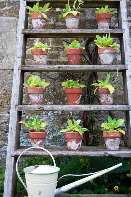 Plant ladder great use of vertical space | The Micro Gardener. I think this would look cool indoors in the winter if your decor was right (vintagey reclaimed wood and stuff).