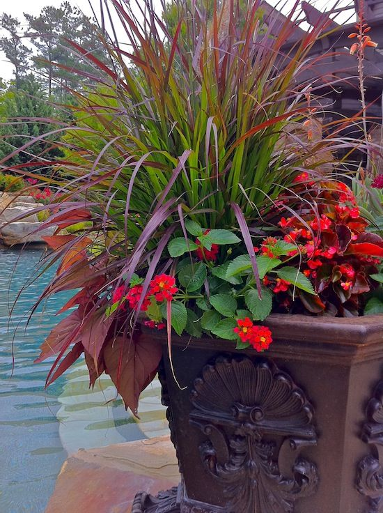 1000 Images About Mixed Flowers For Pots By Pool On