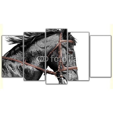 Obraz na płótnie pięcioczęściowy poliptyk - Czarny koń #fedkolor #obraz #na #płótnie #poliptyk #5części #oryginalne #ozdoby #dekoracje #naścianę #naścienne #koń #czarny #czarnobiałe #blackwhite #zdjęcianapłótnie #obrazzezdjęcia #wydruki #drukowanie