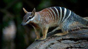 Artensterben: Wissen, Artensterben, Australien, Pest, Säugetier, Tier, Studie, USA, Verlust, Europa