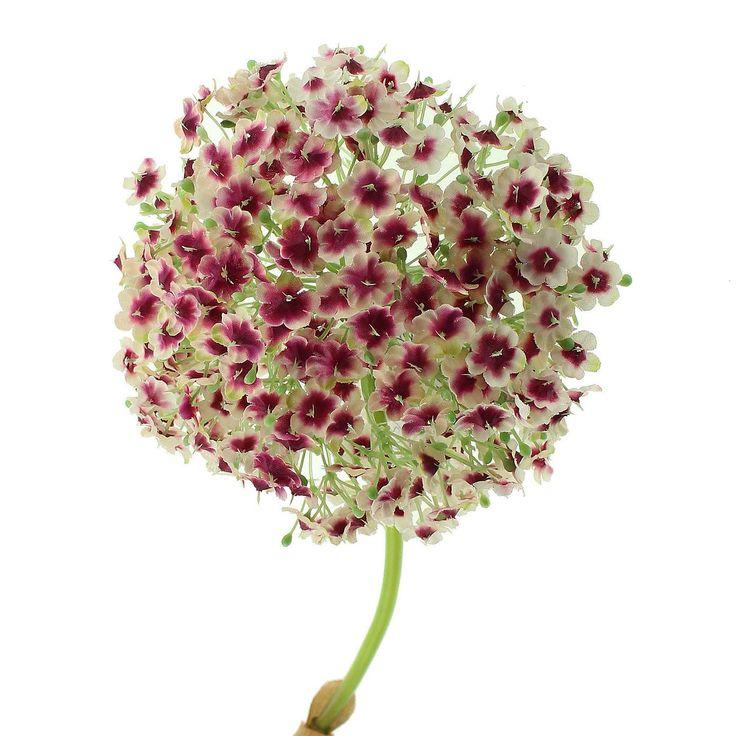 Pink Viburnum Carlcephalum Flower | Dunelm