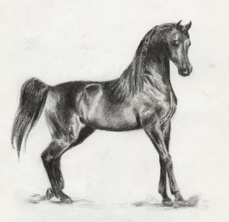 23 best horse muscle images on pinterest horses muscle and muscles pix for arabian horse drawings fandeluxe Gallery
