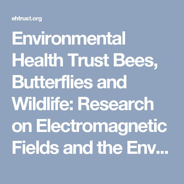 Environmental Health Trust      Bees, Butterflies and Wildlife: Research on Electromagnetic Fields and the Environment - Environmental Health Trust