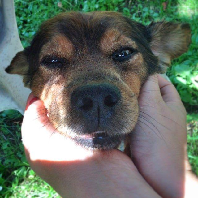 Buon Ferragosto a tutti dal nostro Fortunadrago #fortunadraghi #storiainfinita  #ioamoleggere #michaelende #doggy #pets #dog #instadog #animals #beautiful #bestoftheday #picoftheday #l4l #f4f #like4like