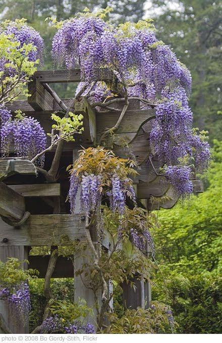 Small Whimsical Garden Ideas Photograph Whimsical Garden D