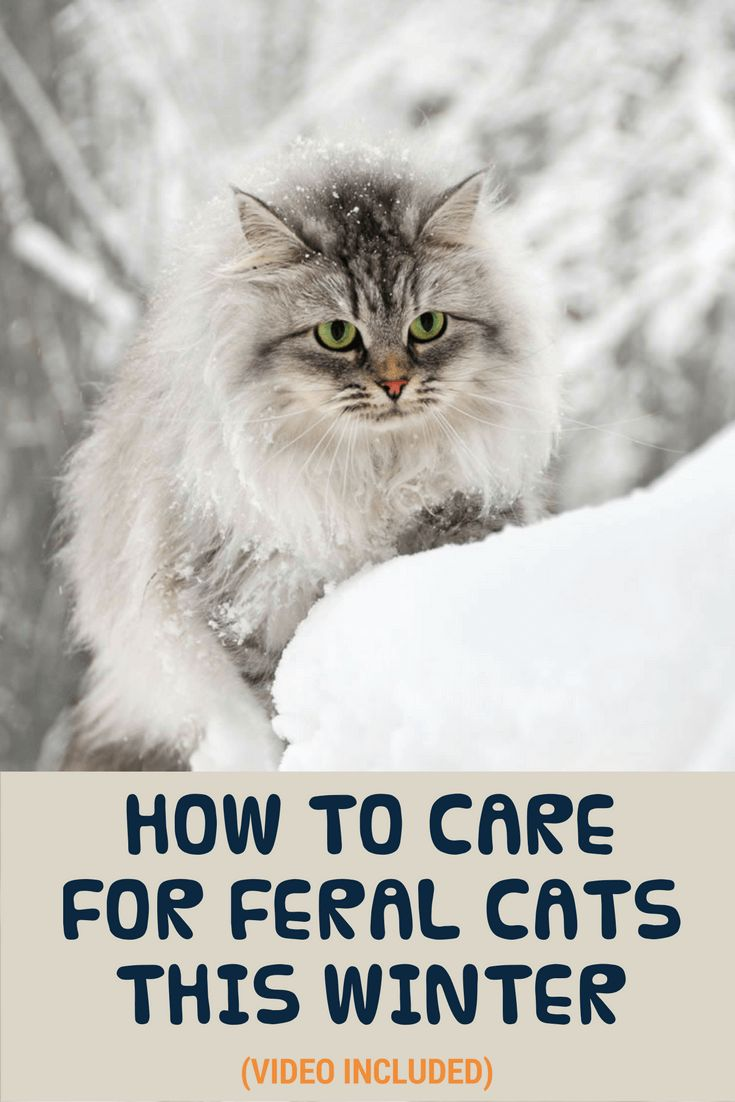 We share some simple tips on how you can help feral cats this upcoming winter