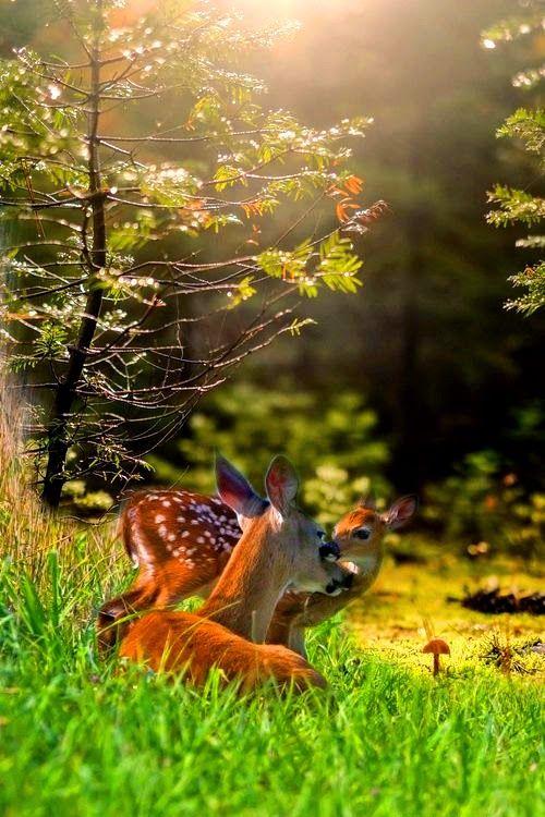 the beauty of wild animals