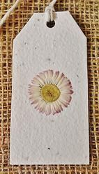 Daisy - Plantable Gift-tag