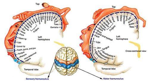 The Hollow Homunculus | PTbraintrust
