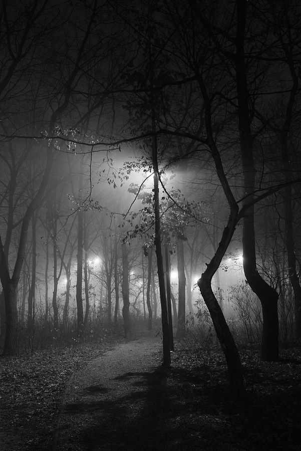 87 best images about Dark Landscapes on Pinterest | The ...