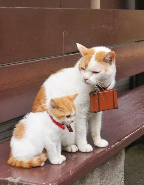 Best Animal Mums And Their Babies Images On Pinterest - 28 adorable cat mums proud of their tiny kittens