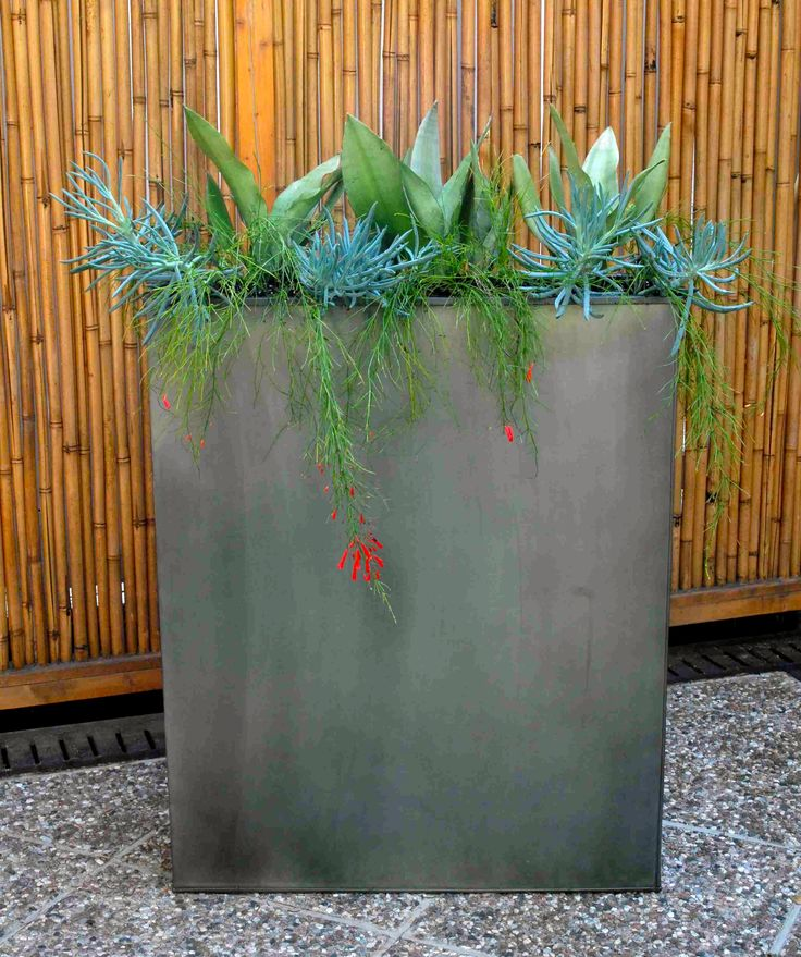 1000 id es propos de sansevieria trifasciata sur pinterest plantes d 39 int rieur plantes d. Black Bedroom Furniture Sets. Home Design Ideas