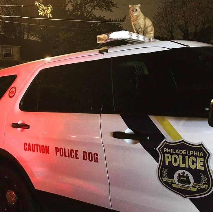 Posted by the Philadelphia Police Department... #cats #orangetabby