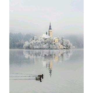 力強いアルプス山脈に囲まれるエメラルドグリーンのどこまでも澄み切った湖がハネムーンや結婚式の目的地として注目を集めています。 「アルプスの瞳」と言われているスロベニアのレイクリゾート地、ブレッド湖のおとぎ話のように美しい景色を紹介します。