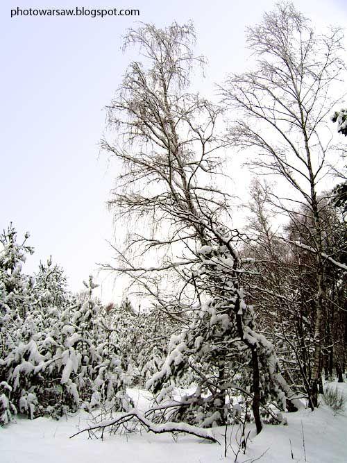 Winter, Poland