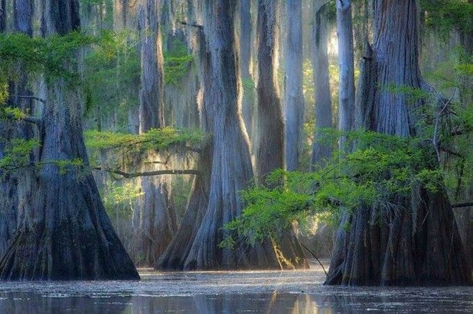 CADDO LAKE....western Caddo Parish in Louisiana....a 25,400 acres lake and bayou (wetland) on the border between Texas and Louisiana.....named after the Southeastern culture of Native Americans called Caddoans or Caddo who lived in the area until their expulsion in the 19th century....includes one of the largest flooded cypress forests in the U.S....the world's first over-water oil platform was completed in Caddo Lake in 1911
