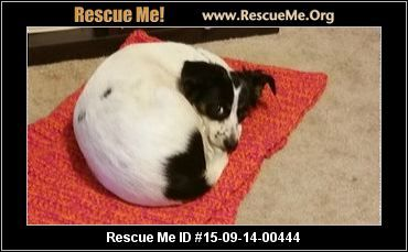 ― Texas Border Collie Rescue ― ADOPTIONS ―RescueMe.Org