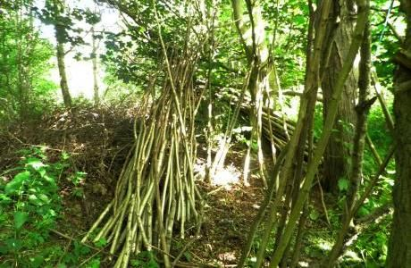 Hazel coppice sticks