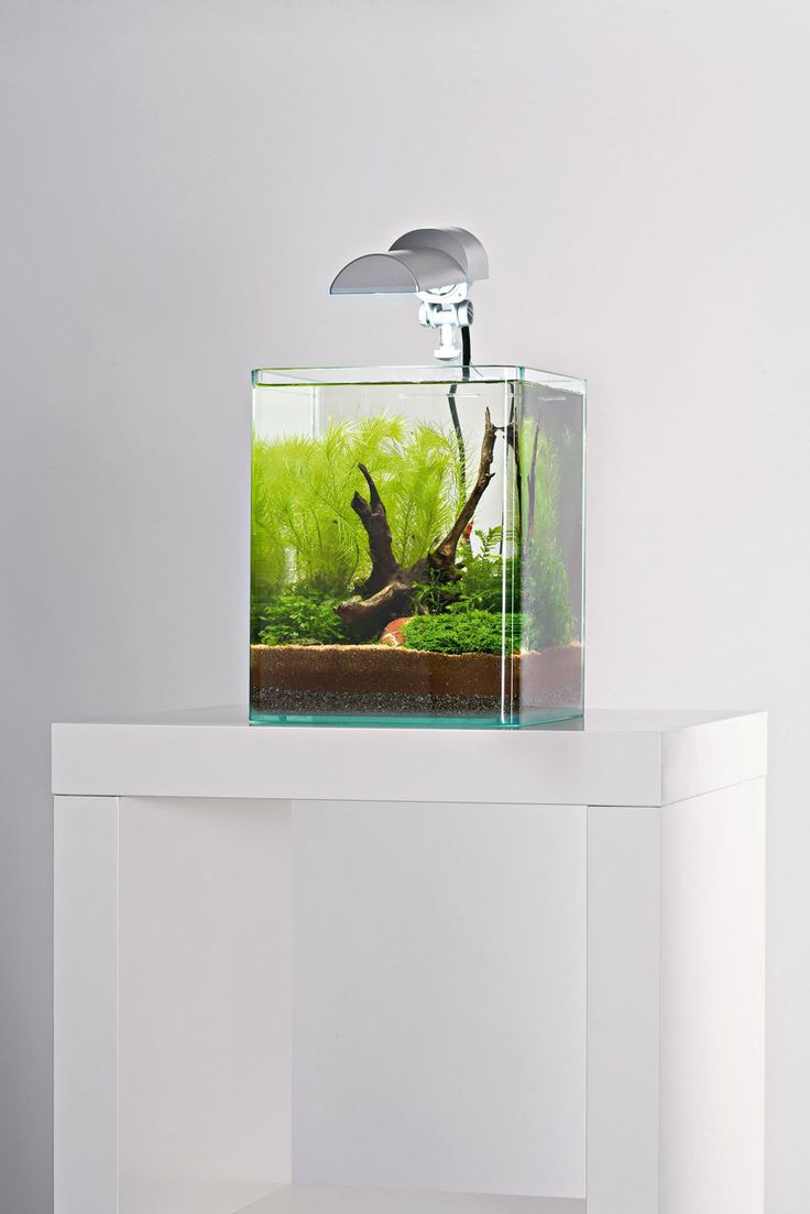 Aquarium Cube
