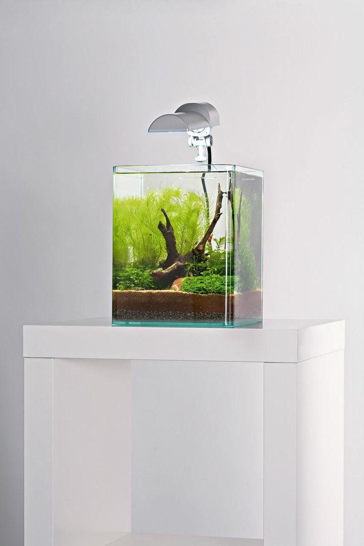 Dennerle nano cube mayaca cube 10 liter freshwater for Aquarium 10 litres