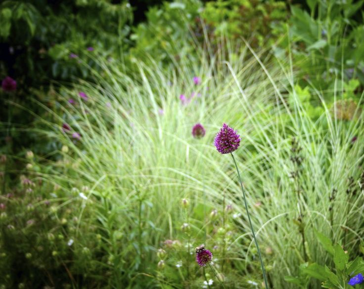 40 best design hot border planting images on pinterest for Hearty ornamental grasses
