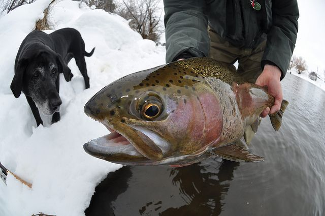 Pro Tips: The Basics of Winter Trout Fishing - Orvis News